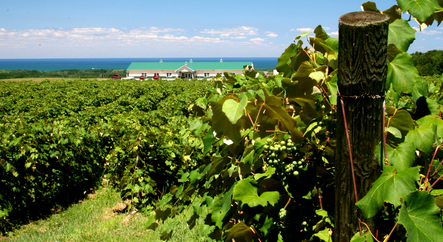 Overlooking-the-lake-in-Lake-Erie-Wine-Country-1